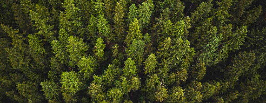 Forêt-resineux